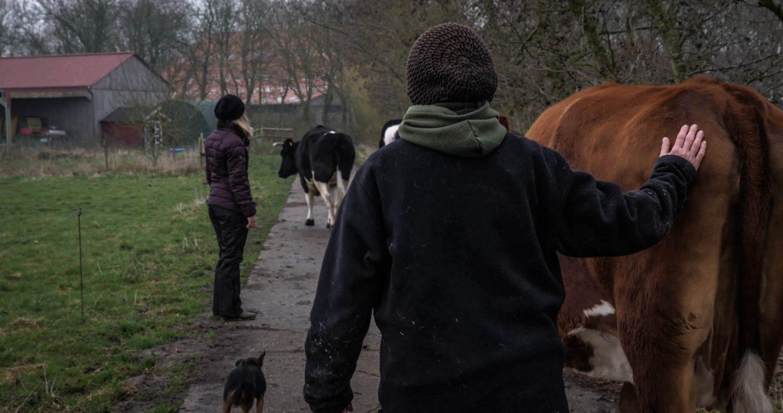 Menschen und Kühe