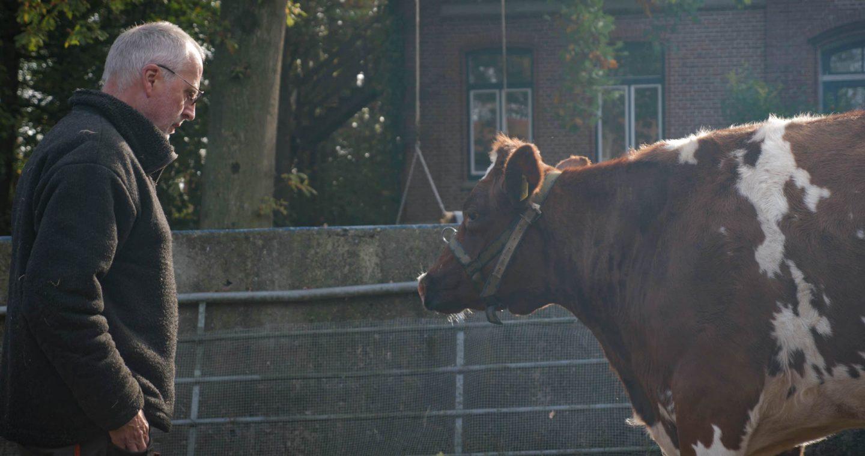 Mensch und Kuh
