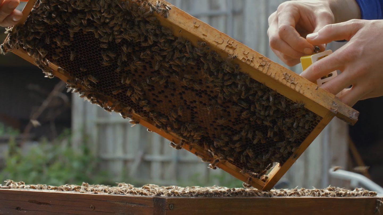 Unsere Haltung zu Honigbienen