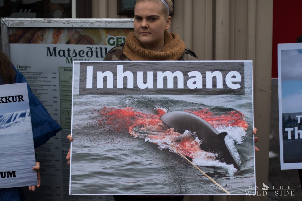 Stoppt den Walfang